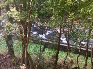 คุณสามารถเห็นแม่น้ำในระหว่างแมกไม้