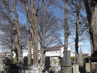 Trees tower over the graves