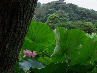 三渓園は三重塔がある広い庭園