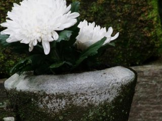 Flowers in front of a grave