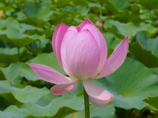 Близкий взгляд на цветок