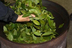 Premier chauffage des feuilles de thé
