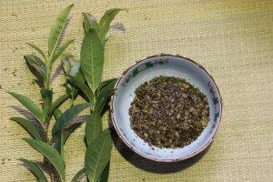 De la feuille au thé Hojicha