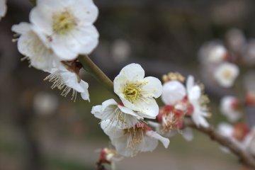小石川後樂園整年都有花朵綻放。