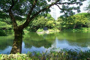 Guided Tours in Tokyo for Tourists