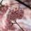 Trésors de la péninsule d'Izu