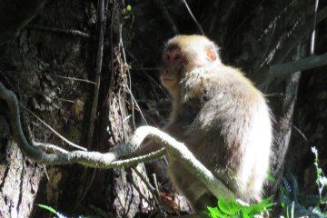 Monkey we passed along the way