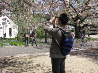 Sama seperti saya, banyak orang yang datang untuk mengambil foto sakura!