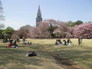 Tempat sempurna untuk piknik dan bermain