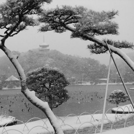 Yokohama's Sankei-en Garden in Snow