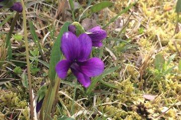 잔디밭에서 봄 발견