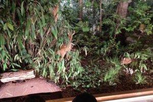 第一ジオラマ。森の生物の展示です。