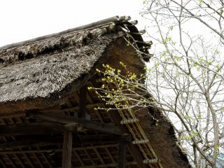 Thatched roof on a firewood shelter
