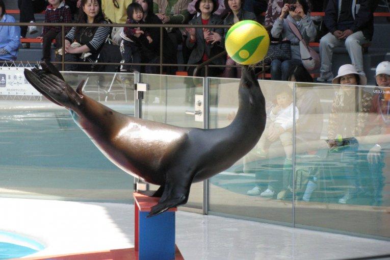Miyajima Aquarium Specialties