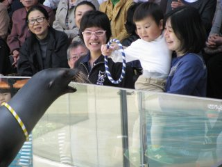 Brave specatators can play with sea lions!