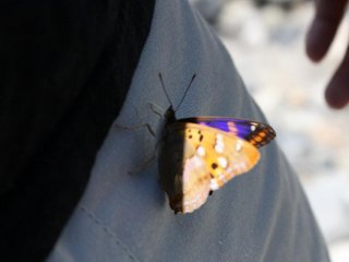 You will meet plenty of butterflies in Kamikochi!