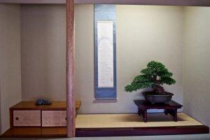 A bonsai tree inside the museum