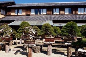 The garden at Shunkaen Bonsai Museum