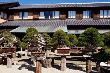 The garden at Shunkaen Bonsai Museum