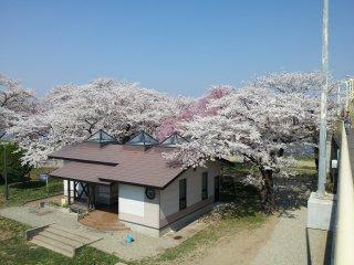 The park at Tenshochi in Kitakami