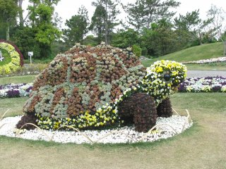 "A ""Tortoise"" made of flowers"