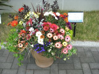 The competition of flower compositions