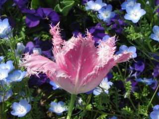 Unique flower in bloom