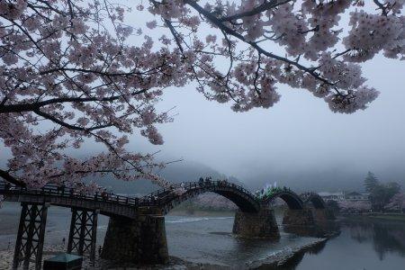 สะพานคินไตเคียวในฤดูใบไม้ผลิ