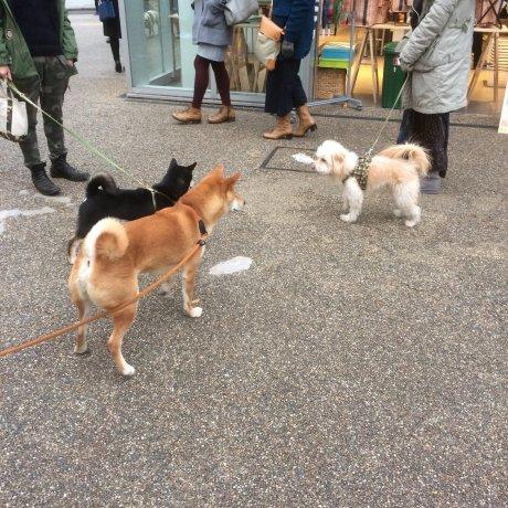 A Day in Daikanyama