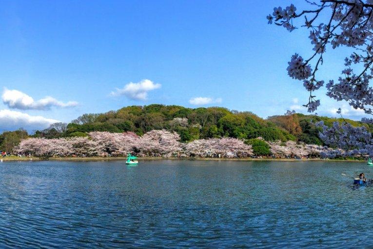 Mekarnya Taman Kastil Akashi