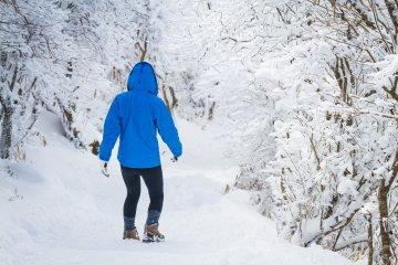 อุโมงค์หิมะบนเส้นทางสู่ภูเขาโฮะชิโชะ
