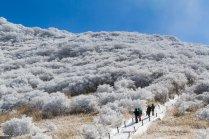A Snowy, Sunny Makinoto Trailhead