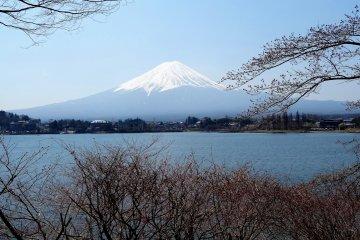 ที่ทะเลสาบคะวะกุชิโกะ คุณสามารณชมวิวภูเขาฟูจิในหลากหลายลุค