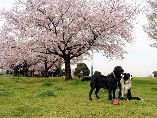 ตั้งท่าถ่ายรูปกับดอกไม้สีชมพู