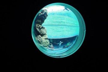Công viên thủy sinh Aquas
