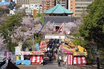 วัดเบ็นเท็นโดะในฤดูดอกซากุระ