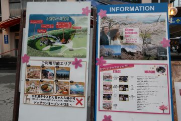Information on the sakura festival
