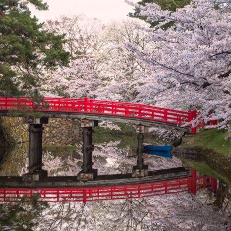 弘前公園の美しい桜
