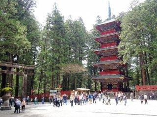 เจดีย์ห้าชั้นแห่งศาลเจ้าโทะโชะ-กุ (Tōshō-gū) แห่งนิกโกะ ที่มีฉากหลังเป็นป่าสนญี่ปุ่นต้นสูงใหญ่
