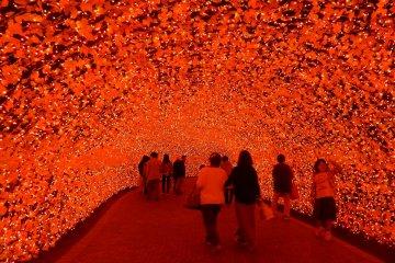 Dive into the lights at Nabana No Sato