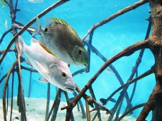 J'ai beaucoup aimé l'aquarium.
