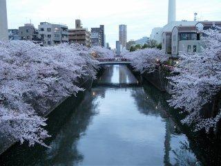 ยามเย็นริมแม่น้ำเมะกุโระ
