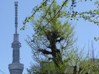 The view to Sky Tree