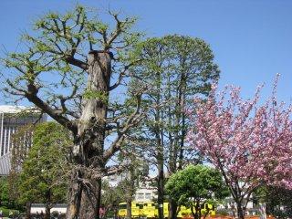 Nice spring greenery