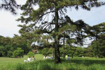Tokyo Walks: Yoyogi Park