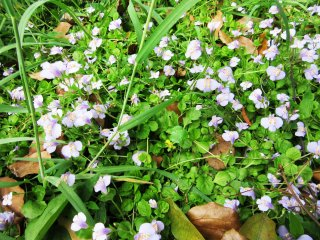 Small wild flowers