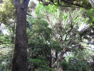 All kinds of trees grow in Yoyogi Koen