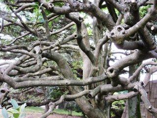 A fantastic looking tree