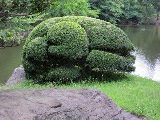 "Tree ""creature"""