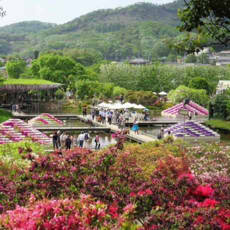 Ashikaga Flower Park in the Spring